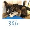3〜4ヶ月くらいの子犬。兄弟で収容されました。