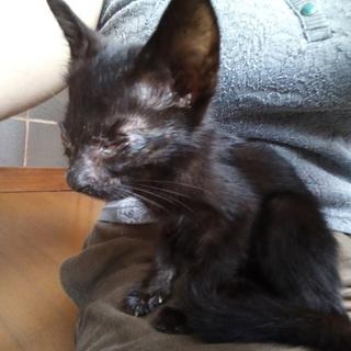 黒猫の男の子 1ヶ月半程度