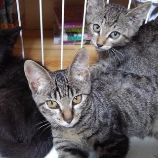 かわいい子猫たちです☆