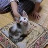 人懐っこくて ちょっと困ったようなお顔の子猫さん