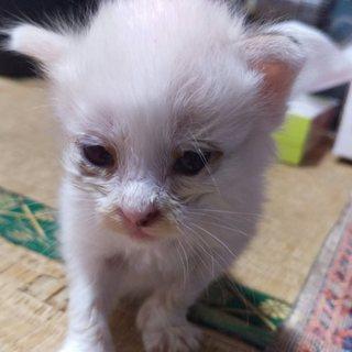生後3週間、ブルーの瞳の男の子