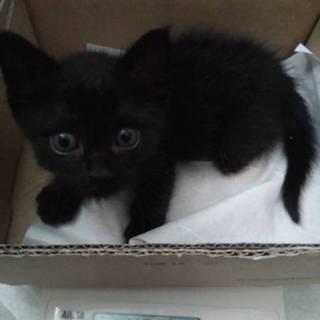 保健所からのレスキュー 黒猫ちゃん