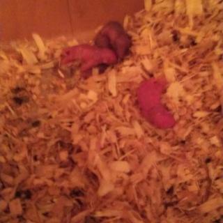 カラージャビルの赤ちゃん