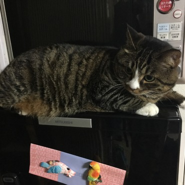え?冷蔵庫?開けさせませんけどなにか?