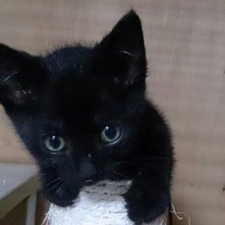 【7/22東日本橋】2ヶ月♡黒猫アダラちゃん