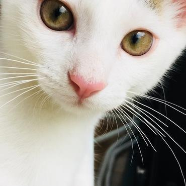 瞳が綺麗!