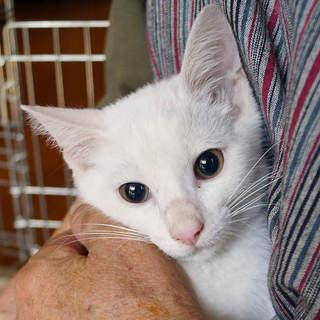 生後3ヶ月。白猫のカイ君(^O^)/