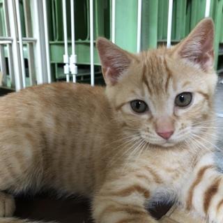 生後1ヶ月半位の兄妹ネコです。