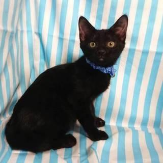 【7/22東日本橋】黒猫♡昴くん