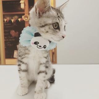 可愛い子猫ちゃん^_^