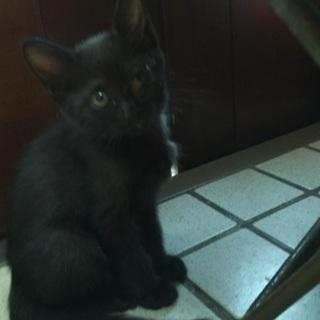 黒猫♂1匹♀1匹里親募集