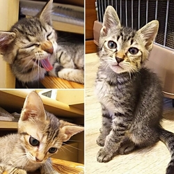 ◎大阪府豊中市・7月29日(日)猫さんたちの譲渡会開催◎