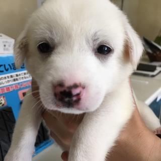 【保健所から引き出し】かわいい子犬です‼️