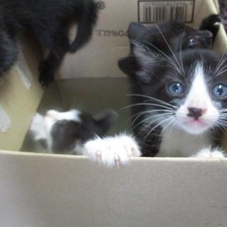 センターから引き出した可愛い子猫☆