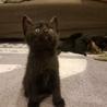 仔黒猫募集!!