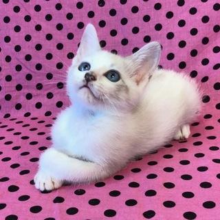 うさぎさん?いえいえ猫さんです。