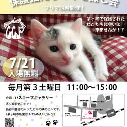 第68回保護猫たちの幸せ探し会