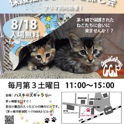 第69回保護猫たちの幸せ探し会