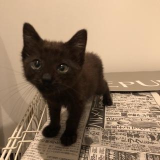 元気いっぱいの黒猫ちゃんです