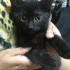 やんちゃで可愛い黒子猫とキジトラ子猫の兄弟です。
