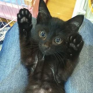 可愛い黒猫君(白い毛が胸にあります)
