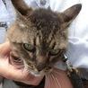 【助けて下さい‼️】迷子の猫ちゃんです。