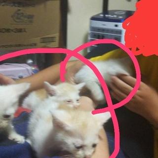 拾って2年たった猫ちゃんの産んだ子猫4匹です!