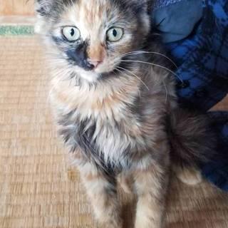 子猫3ヶ月ぐらいです