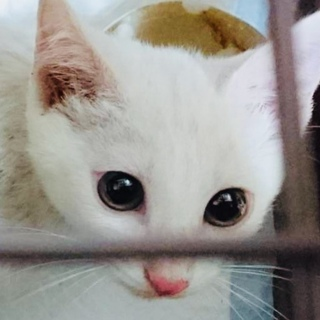 子猫☆オス☆白