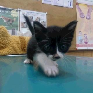 動物病院で保護され、幸せを待っています!