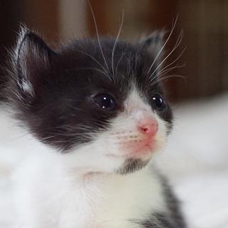 愛知から、子猫の里親さん募集(予約受け付け中)
