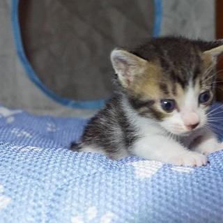愛知から子猫の里親さん募集(予約承ります)