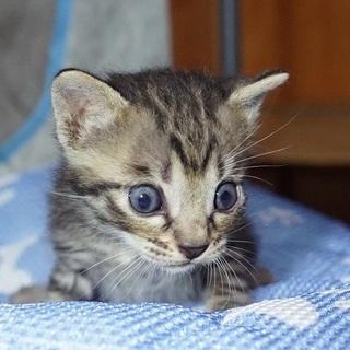 愛知県から子猫の里親さん募集(予約承ります)
