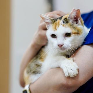 7/29阿倍野区昭和町の保護猫譲渡会に参加します!