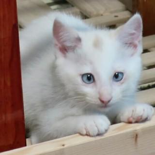 青い目のリラちゃん、家族募集中