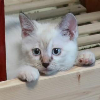 青い目のアイリスちゃん、家族募集中