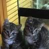 保護猫とその子供の里親募集