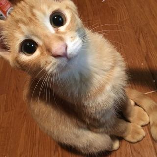 懐こい薄茶子猫