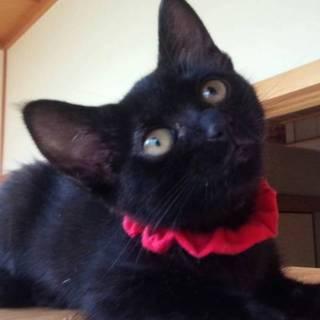 黒猫の女の子 !  愛ちゃん