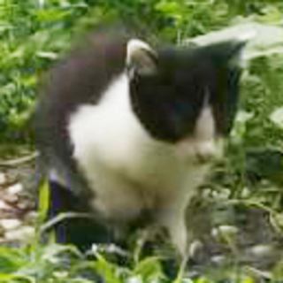 黒白2ヶ月の子猫(4匹)