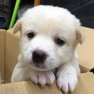 【保健所引き出し】かわいい子犬です❣️