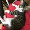 甘えん坊の子猫の優しい里親さん募集