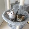 生後1か月の子ネコの里親大募集
