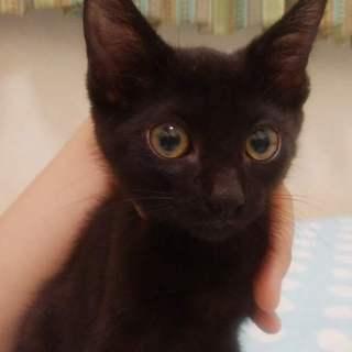スリゴロ甘えん坊の黒猫 ボルツちゃん