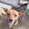 穏やかで優しい性格の小型犬。7/28里親募集会 サムネイル2