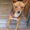 穏やかで優しい性格の小型犬。7/28里親募集会 サムネイル3