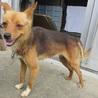 穏やかで優しい性格の小型犬。7/28里親募集会 サムネイル7