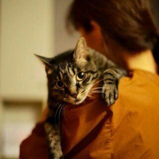 とても人懐っこい人間大好きなキジトラ猫フランシス