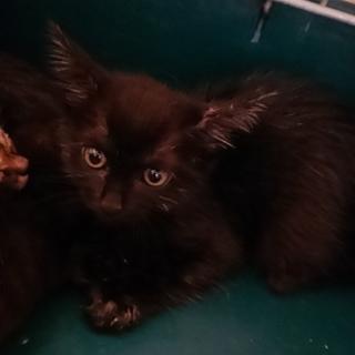 抱っこ大好き黒猫の女の子