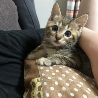 2ヶ月のかわいい子猫